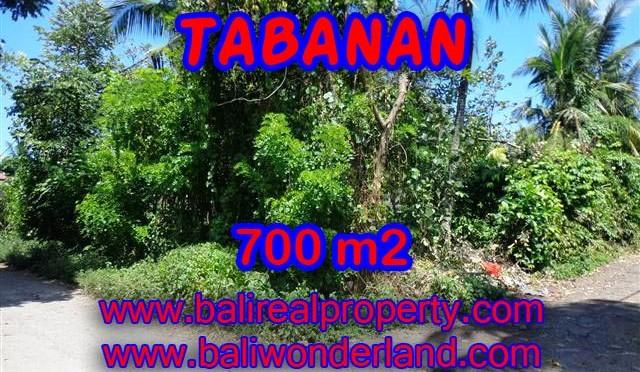 INVESTASI PROPERTI DI BALI – DIJUAL TANAH DI TABANAN BALI CUMA RP 3.800.000 / M2
