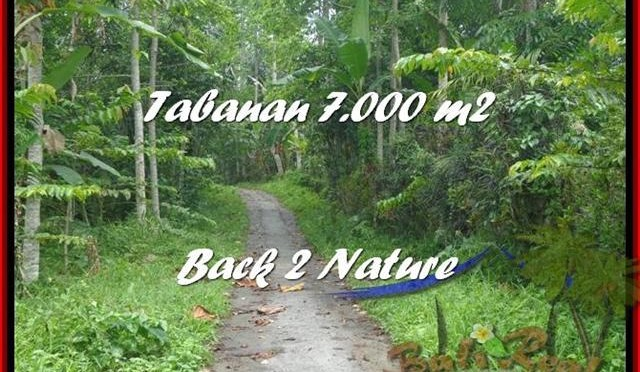 JUAL MURAH TANAH di TABANAN 70 Are di Tabanan Penebel