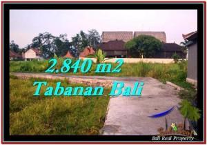 TANAH DIJUAL MURAH di TABANAN BALI TJTB247