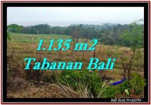 TANAH JUAL MURAH  TABANAN 1,135 m2  View sawah, laut dan gunung