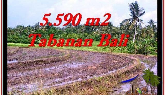 JUAL TANAH di TABANAN BALI 5,590 m2  View sawah dan laut