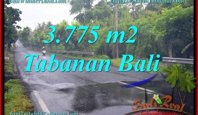 TANAH DIJUAL MURAH di TABANAN BALI 3,775 m2 di Tabanan Selemadeg