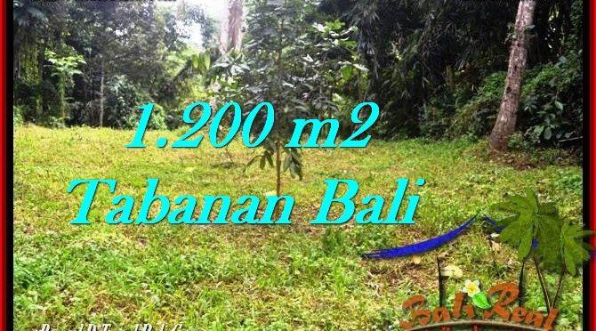 TANAH di TABANAN BALI DIJUAL MURAH 12 Are di Tabanan Penebel