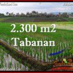 TANAH di TABANAN BALI DIJUAL MURAH Untuk INVESTASI TJTB263