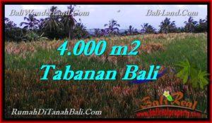 JUAL TANAH di TABANAN BALI 4,000 m2  View sawah dan laut