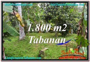TANAH MURAH di TABANAN BALI Untuk INVESTASI TJTB293