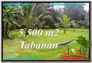 JUAL TANAH MURAH di TABANAN BALI 5,500 m2  View kebun dan sungai