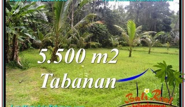 TANAH di TABANAN DIJUAL 5,500 m2 di Tabanan Penebel