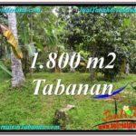 INVESTASI PROPERTY, TANAH di TABANAN BALI DIJUAL MURAH TJTB293