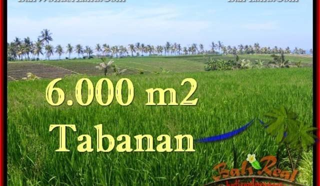 TANAH di TABANAN BALI DIJUAL MURAH 6,000 m2 di Tabanan Selemadeg