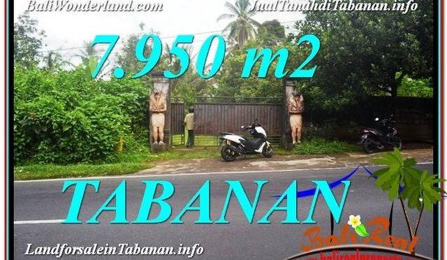 TANAH MURAH DIJUAL di TABANAN BALI Untuk INVESTASI TJTB331